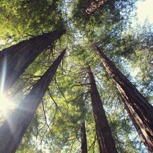 Parquet-e-deforestazione—norme-e-sostenibilita-maxi